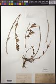 view Euphorbia sp. digital asset number 1