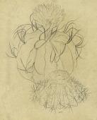 view Malacocarpus tephracanthus digital asset number 1