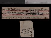 view Thomomys umbrinus umbrinus digital asset number 1