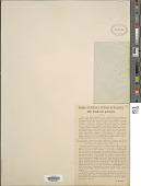 view Euphrasia pulchella A. Kern. digital asset number 1