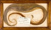 view Mammuthus primigenius (Blumbach) digital asset number 1
