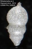 view Stilostomella sp d Hayward et al., 2012 digital asset number 1