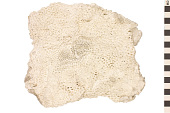 view Stony Coral digital asset number 1