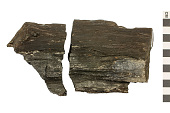 view Petrified Wood digital asset number 1
