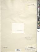 view Oscillatoria submembranacea Ardiss. & Strafforello ex Gomont digital asset number 1
