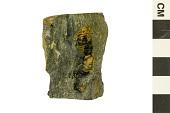 view Trilobite digital asset number 1