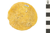 view Sand Dollar digital asset number 1