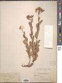 view Spiraea douglasii Hook. digital asset number 1