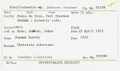 view Poecilochaetus johnsoni digital asset number 1