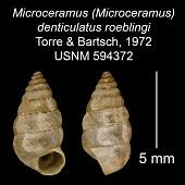 view Microceramus (Microceramus) denticulatus roeblingi digital asset number 1