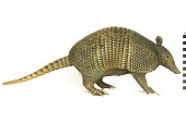 view Nine-banded Armadillo, Long-nosed Armadillo digital asset number 1