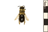 view Mining Bee digital asset number 1