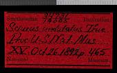 view Heliosciurus undulatus digital asset number 1