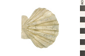 view Fossil Scallop digital asset number 1