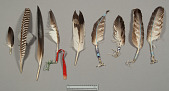 view Hat Feathers digital asset number 1