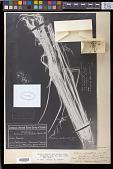 view Festuca subuliflora Scribn. in Macoun digital asset number 1