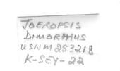 view Joeropsis dimorpha digital asset number 1