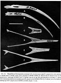 view Hemignathus upupirostris James & Olson, 1991 digital asset number 1