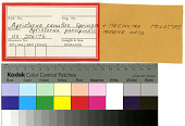 view Apristurus parvipinnis Springer & Heemstra digital asset number 1