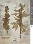 view Aconitum uncinatum L. digital asset number 1
