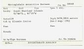 view Myrioglobula antarctica digital asset number 1