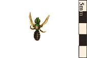 view Metallic Green Bee digital asset number 1