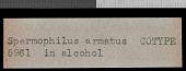 view Urocitellus armatus digital asset number 1