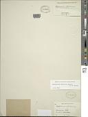 view Adenophorus abietinus (D.C. Eaton) K.A. Wilson digital asset number 1