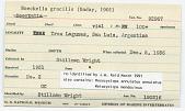 view Boeckella gracilis digital asset number 1