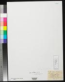 view Erythrocladia vagabunda M. Howe & Hoyt digital asset number 1