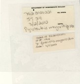 view Pyroteuthis margaritifera digital asset number 1