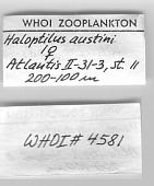 view Haloptilus austini digital asset number 1