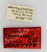view Tabanus toumanoffi digital asset number 1