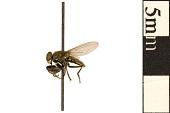 view Mantis Fly digital asset number 1
