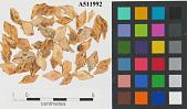 view Lepisosteidae digital asset number 1
