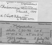 view Cherbonniera utriculus digital asset number 1