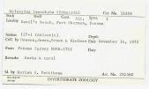 view Halosydna leucohyba digital asset number 1