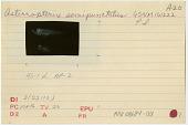 view Asterropteryx semipunctata digital asset number 1