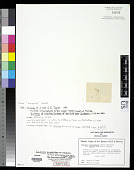 view Caulerpa paspaloides var. minima Humm & S.E. Taylor digital asset number 1