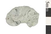 view Fossil Mollusk digital asset number 1