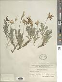 view Astragalus vesicarius L. digital asset number 1