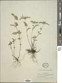 view Clinopodium vulgare L. digital asset number 1