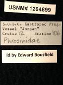 view Phrosinidae digital asset number 1