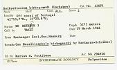 view Bathyeliasona kirkegaardi digital asset number 1