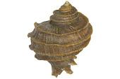view Murax Snail digital asset number 1