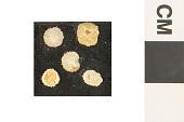 view Bryozoa digital asset number 1