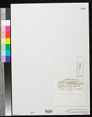 view Fosliella farinosa var. chalicodictyon W.R. Taylor digital asset number 1