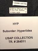 view Hyperiidea digital asset number 1