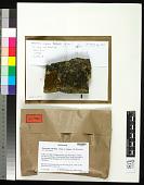 view Steineropsis alaskana T. Sprib. & Muggia digital asset number 1