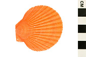 view Delicate Scallop digital asset number 1